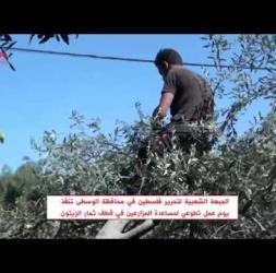 الشعبية في محافظة الوسطى تنفذ يوم عمل تطوعي لمساعدة المزارعين في قطف ثمار الزيتون